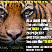 Ohana Tigers Estrada/Hecht 14u Tryouts